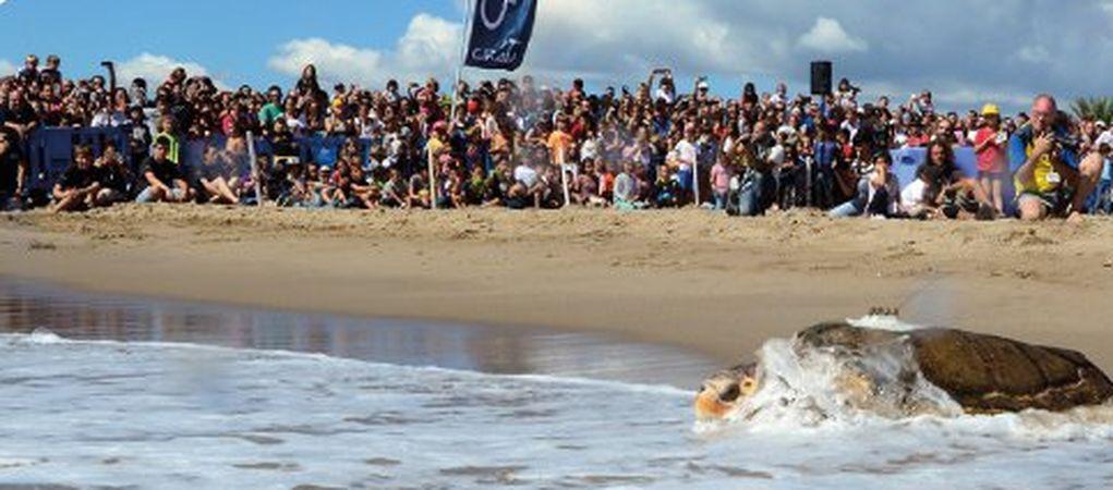 La Fundació CRAM, Amb La Col·laboració De La Fundació Iluro I Bankia, Organitza Un Acte Públic D'alliberament De Tortugues Marines